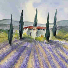 Lavendelfeld-Ludiwg-Kohl