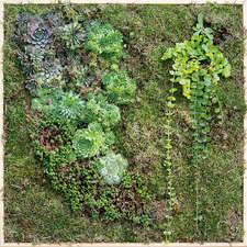 K_Hertje-Chlorophyll